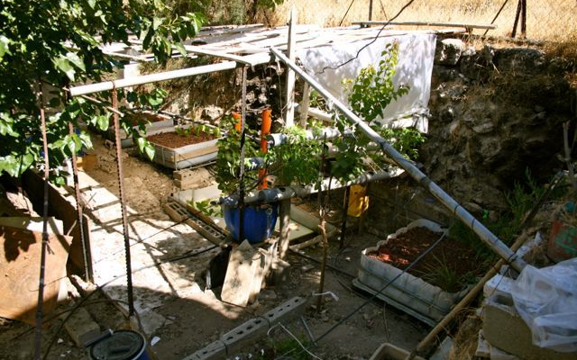 Aquaponics in Palestine